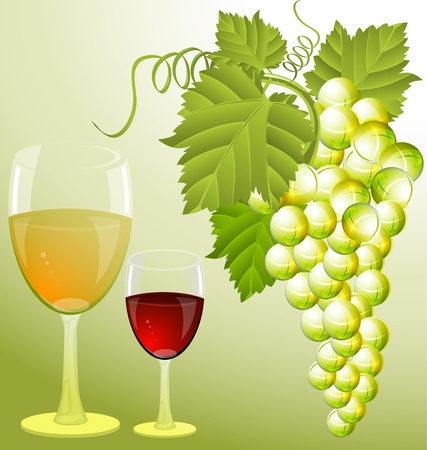 colorful illustration of Wine and grapes Vector