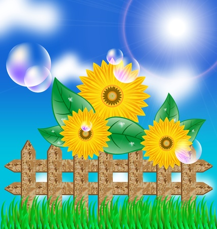 cornfield: Background with a field of sunflowers and blue sky Illustration