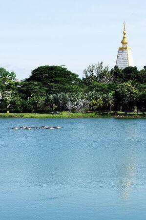 Pagodas and gardens                     photo
