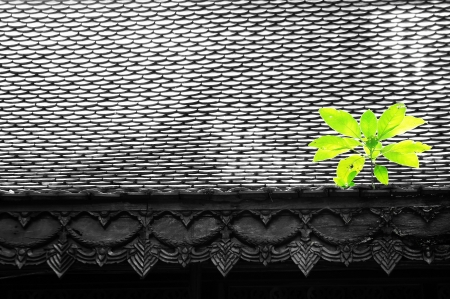 roof and plant                   photo