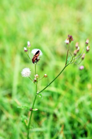Insect on top of the grass