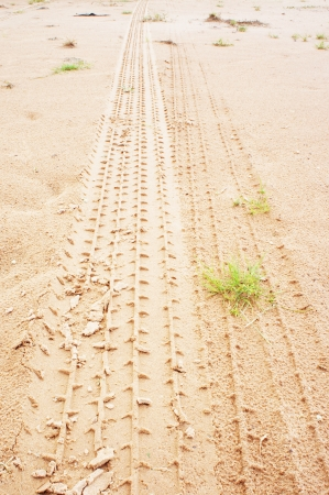 Tire tracks on the ground after a rain Stock Photo - 15309551