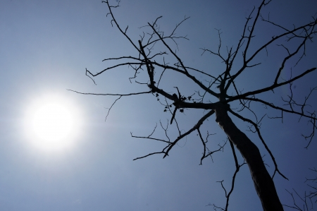 old tree and the sun photo