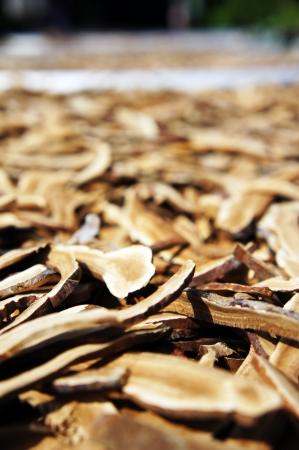 Dry Lingzhi mushroom Stock Photo