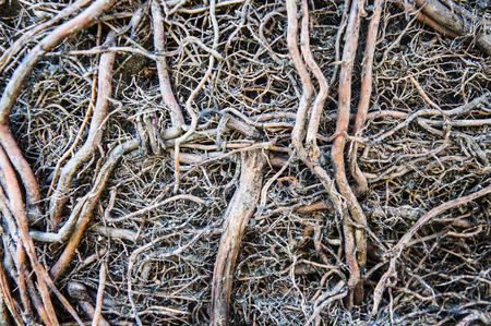 Roots and soil Stock Photo