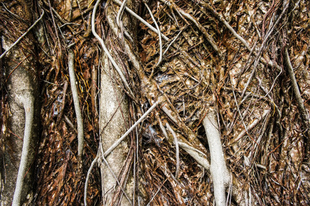 grassroots: Roots and soil Stock Photo