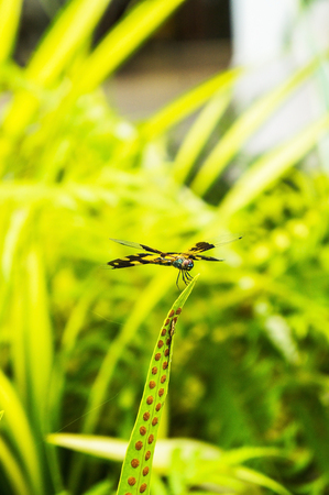 snaketail: Close up dragonfly
