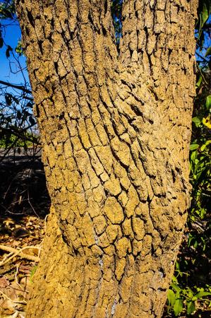 dry tree: Tree bark texture