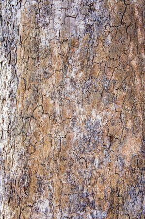 lumber industry: Tree bark texture