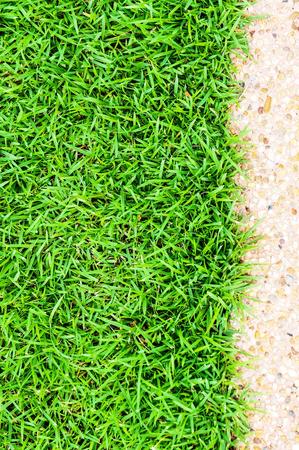 grassplot: Natural background of green grass