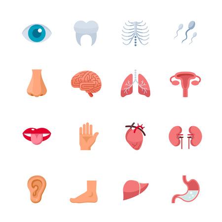 Menselijke Anatomie Pictogrammen Stockfoto - 28641586