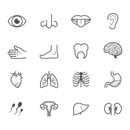 Human Anatomy Icons Zdjęcie Seryjne - 36353688