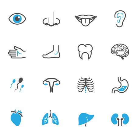 anatomie humaine: Icônes anatomie humaines