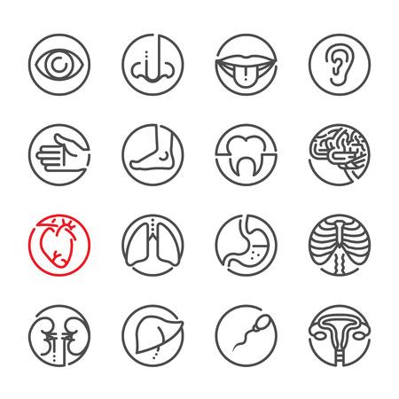 lugs: Human Anatomy icons with White Background Illustration