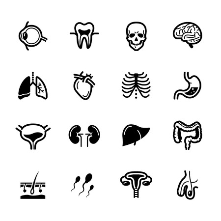 Human Anatomy icons with White Background Illustration