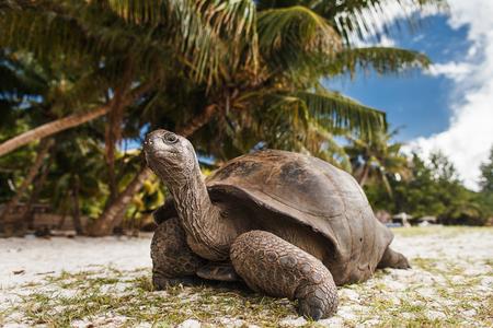 Seychelles. Giant tortoise on Curieuse Island Zdjęcie Seryjne