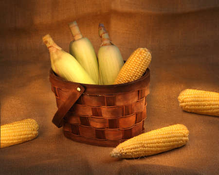 still life photo with corn cobs in a  basket