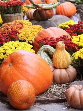 Holiday decoration with pumpkins and flowers Stock Photo