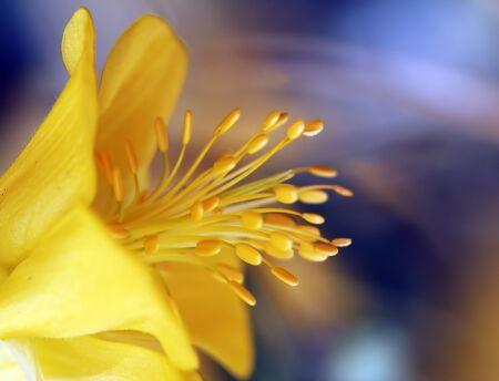 Macro-opname van een bloem in een tuin Stockfoto