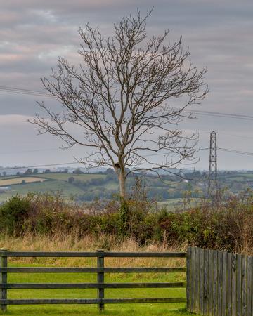 northern ireland: Tree in rural Northern Ireland farmland. Stock Photo