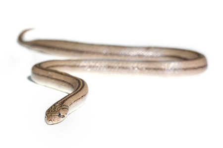 Close up snake on white background photo