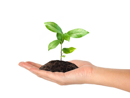 grow: plant in the hand on white background