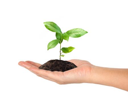 plante: plante à la main sur fond blanc