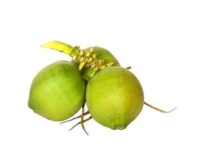 noix de coco: Noix de coco vertes sur fond blanc