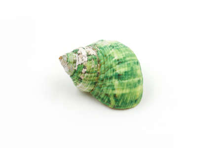 green sea: green Sea shells on white background