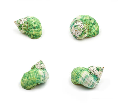green sea: green Sea shells Collection on white background