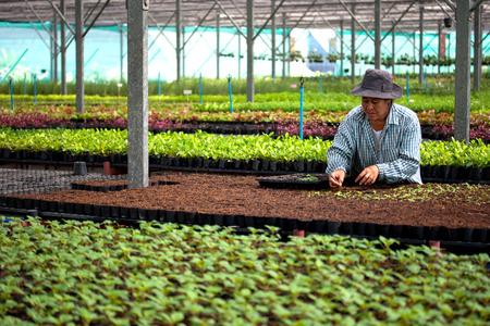 sembrando un arbol: BANGKOK, TAILANDIA: February 24, 2010: las mujeres de Tailandia est�n plantando un �rbol en la casa. Editorial