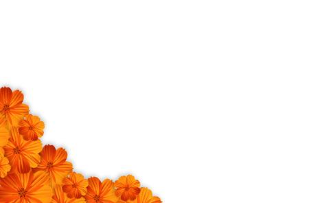 marigold flower isolated on white background photo