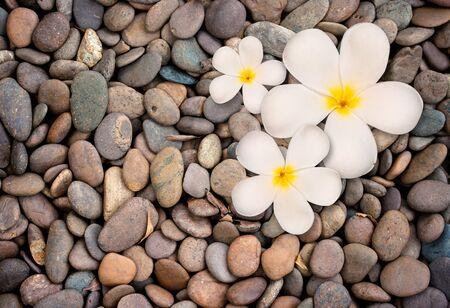exotic flowers: frangipani flower on stone background,  Zen spa background.