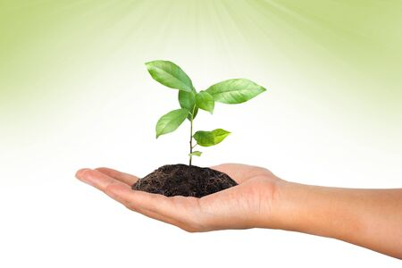 green in hand: plant in the hand on green background