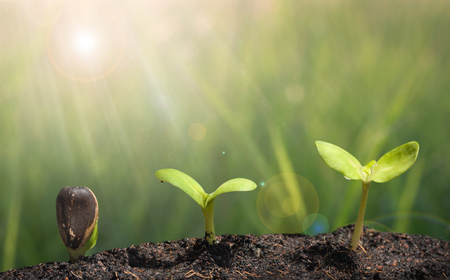 grow: Small plant on pile of soil - Grow concept Stock Photo