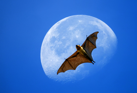 Flying fox on the moon in daytime and blue sky.