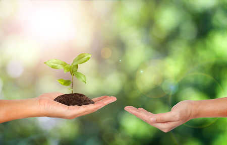 csr: Plant in the hand on green nature background - Corporate social responsibility concept. Stock Photo