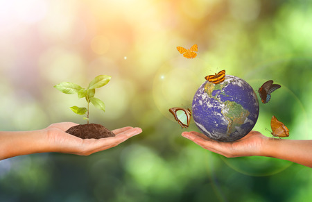 Plant and earth in the hand on green nature background - Corporate social responsibility concept. - Elements of this image furnished by NASA