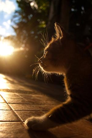 Pretty cat in sunlight.