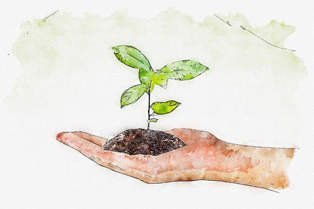 Watercolor of plant in the hand on green background. Stock Photo