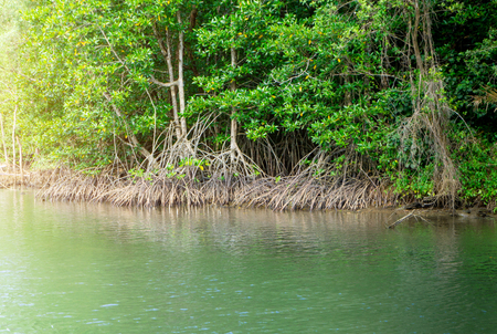 Above view of mangrove forest in thailand.