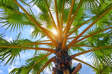 Low Angle View Of Palm Tree Against Sky.