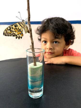 Asian boy looks at butterflies that leave the pupa.