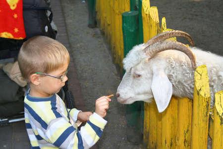 unafraid: Boy and goat