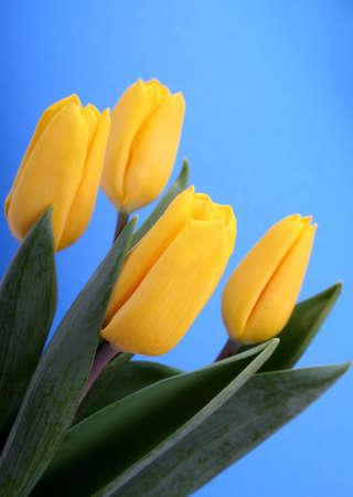 donative: Yellow tulips