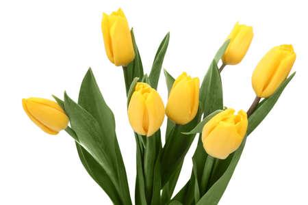 donative: Tulips on white background