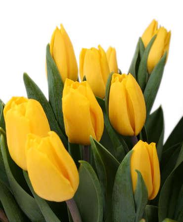 donative: Yellow tulips against white background