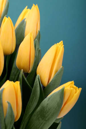 springy: Yellow tulips against green background