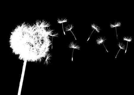 dandelions in wind on dark background Illustration