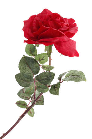spuria: Singola rosa rossa
